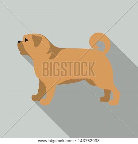 Pug vector illustration icon in flat design