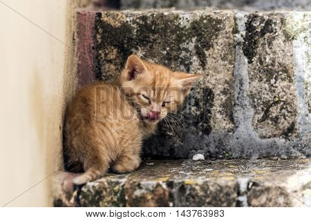 young small red striped cat funny sympathetic grimace