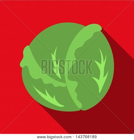 Cabbage icon flat. Singe vegetables icon from the eco food flat.