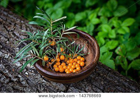Seabuckthorn berries in a wooden bowl. Freshly picked berries