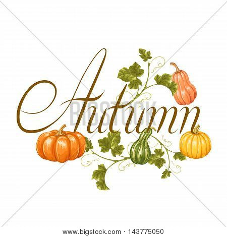Autumn background with pumpkins. Decorative illustration from vegetables and leaves.