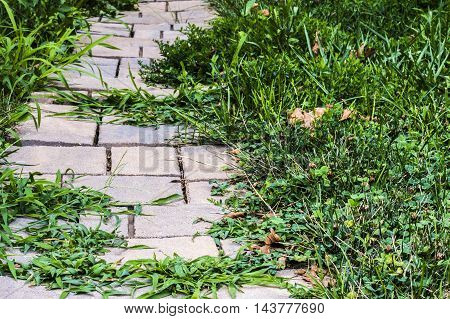 Windy uneven walkway over grown with grass