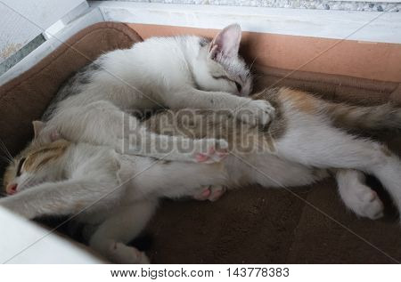 little cat with her sister