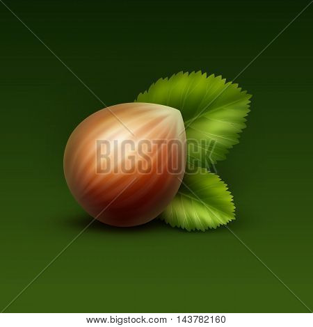 Vector Full Unpeeled Realistic Hazelnut with Leaves Close up Isolated on Green Background