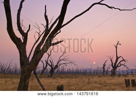 Dead trees in the middle of Lake Mokoan, shrouded by bushfire smoke.