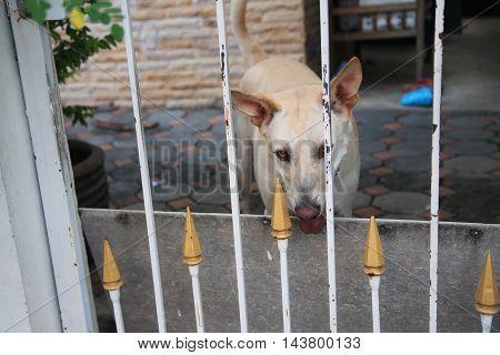 Home Dog Staring Visitors