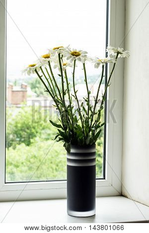 Bouquet of chamomiles flowers on the window sill.