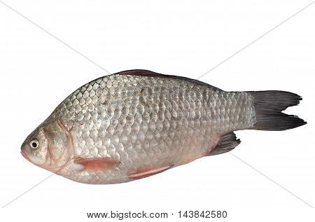 The freshest catch awaits cooking.Isolated on a white background.