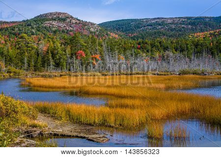 Marsh Grass In Seal Cove Pond On A Beautiful Autumn Afternoon At Mount Desert Island And Acadia National Park Maine USA