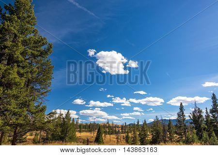 Beautiful Yellowstone Landscape