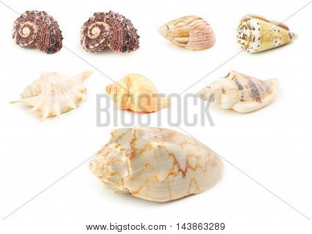 Sea shells isolated on a white collage