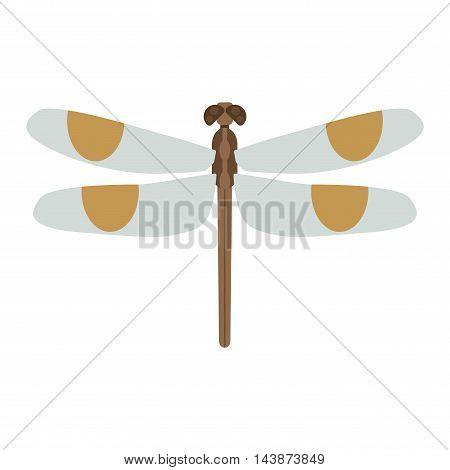 Summer dragonfly beautiful fragility damselfly.