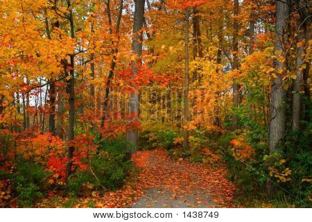 Scenic Autumn Walk Way