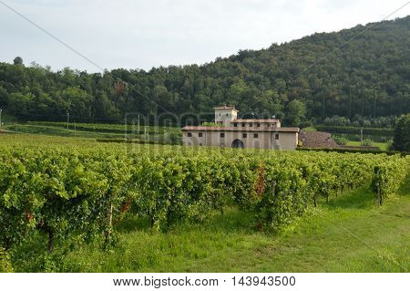 Ancient farm estate with its vineyards in the countryside of Brescia - Italy