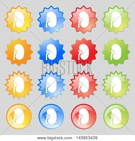 Kidney Icon Sign. Big Set Of 16 Colorful Modern Buttons For Your Design. Vector