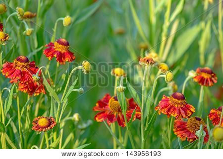Close up of red flowers with blur green background