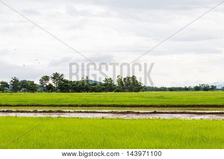 Green Field And Sky With White Clouds.