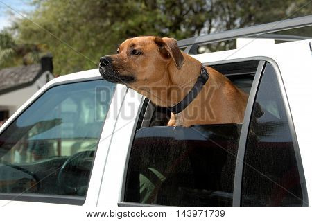 cute dog looking out of a car window