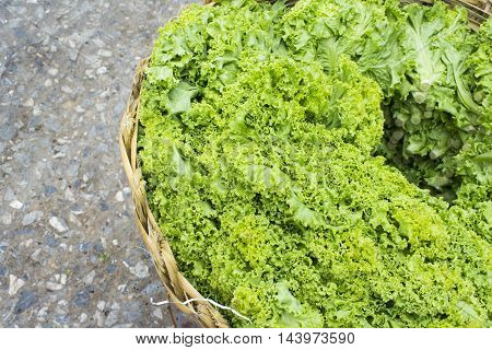 fresh vegetable, Green vegetables, iceberg lettuce, Vegetable, vegetable Basket, vegetable market, vegetable salad