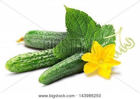 Cucumbers, Leaf, Tendril, Flower Together, Paths