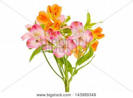Alstroemeria flower  bouquet on a white background