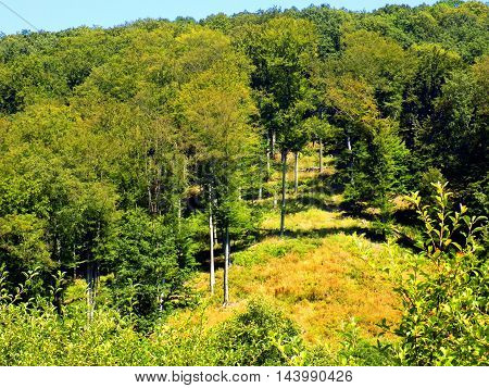 Many deciduous trees in deciduous forest in wild nature during sunny day