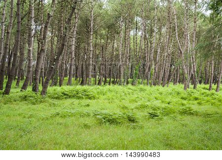 forest scenery around Carnac a commune in the Morbihan department of Brittany France