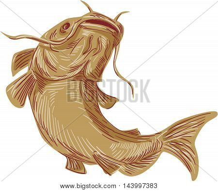 Drawing sketch styleillustration of a ray-finned fish catfish also known as mud cat polliwogs or chucklehead going up viewed from front set on isolated white background.