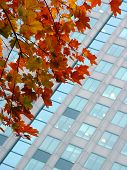 autumn leaves against a corporate building poster