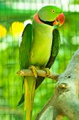 Colourful parrot bird sitting on the perch poster
