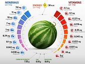 Vitamins and minerals of watermelon fruit. Infographics about nutrients in raw melon. Qualitative vector illustration for watermelon, vitamins, fruits, agriculture, health food, nutrients, diet, etc poster
