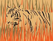 Vector illustration of a tiger in dry grass with tiger and grass as separate elements poster