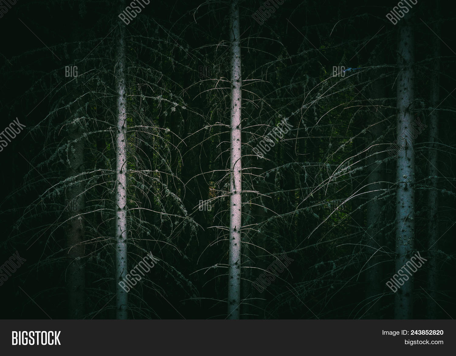 Pine Dark Night Creepy Image & Photo (Free Trial) | Bigstock