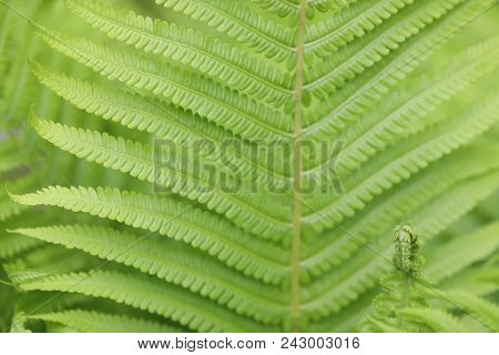 Image by Shutterstock All Seeing Eye Ferns Graphic Men/'s Tee