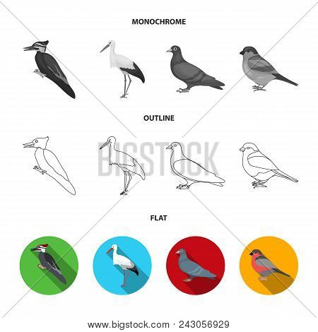 Woodpecker, Stork And Others. Birds Set Collection Icons In Flat, Outline, Monochrome Style Vector S