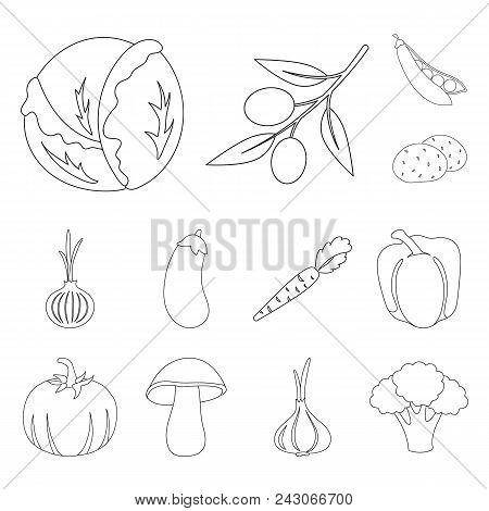Different Kinds Of Vegetables Outline Icons In Set Collection For Design. Vegetables And Vitamins Ve