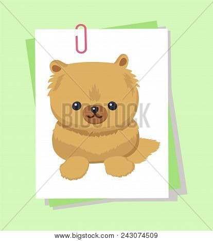 Dwarf Spitz Picture, Poster With Animal With Fluffy Fur And Cute Face, Pet With Fun Expression, Dogg