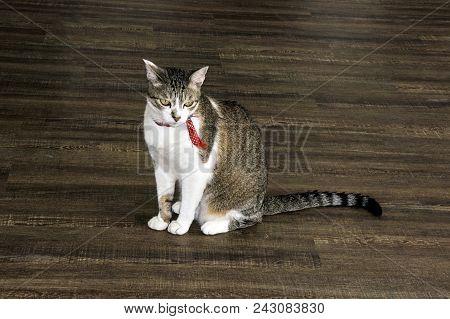 Cat Mutt   Looking Wooden Floor  Pet Red Collar