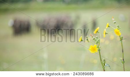 Tiny yellow flowers in meadow with blurred nature and soldiers background. Space for text, close up view of the wild plant.
