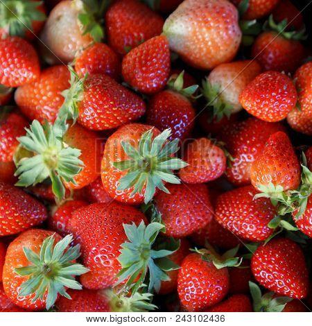 Background From Freshly Harvested Strawberries, Fresh Strawberry Background