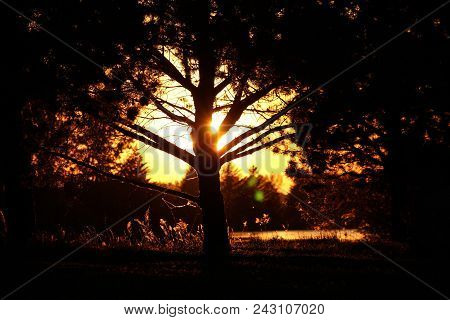 Twilight Tree Silhouette In Shades Of Ornge