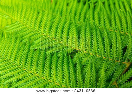 Tree Fern Frond Pattern Abstract, Background Texture
