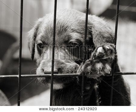 Sad puppy in a pen