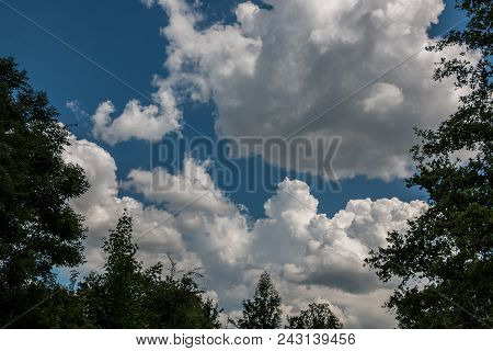 The Forest And The Deep Blue Sky With White Clouds