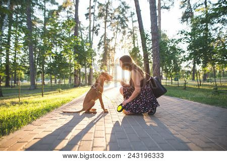 Beautiful Dog And Pretty Girl Sitting On The Alley In The Park On The Background Of The Sunset. Even
