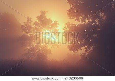 Summer Nature Background Of Yellow Sunrise On Foggy Morning. Summer Landscape Of Wild Nature. Natura