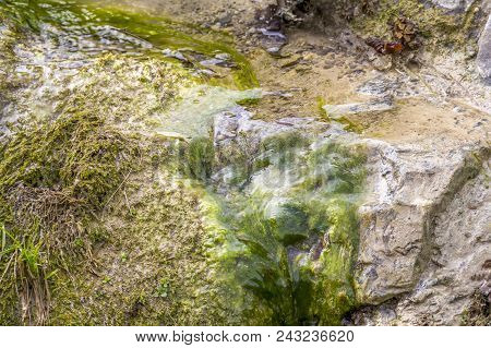 Detail Of A Little Brook With Some Flowing Water And Green Algae