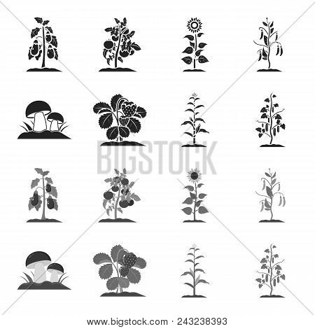 Mushrooms, Strawberries, Corn, Cucumber.plant Set Collection Icons In Black, Monochrome Style Vector
