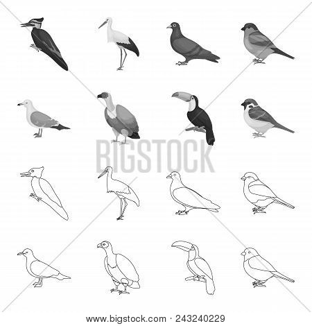 Gull, Toucan And Other Species. Birds Set Collection Icons In Outline, Monochrome Style Vector Symbo