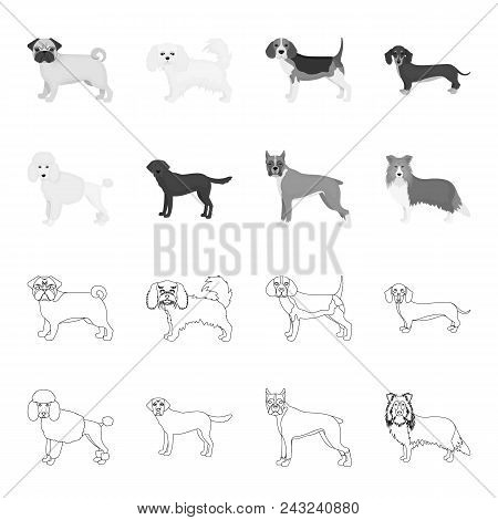 Dog Breeds Outline, Monochrome Icons In Set Collection For Design.dog Pet Vector Symbol Stock  Illus